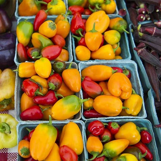 Various colorful peppers